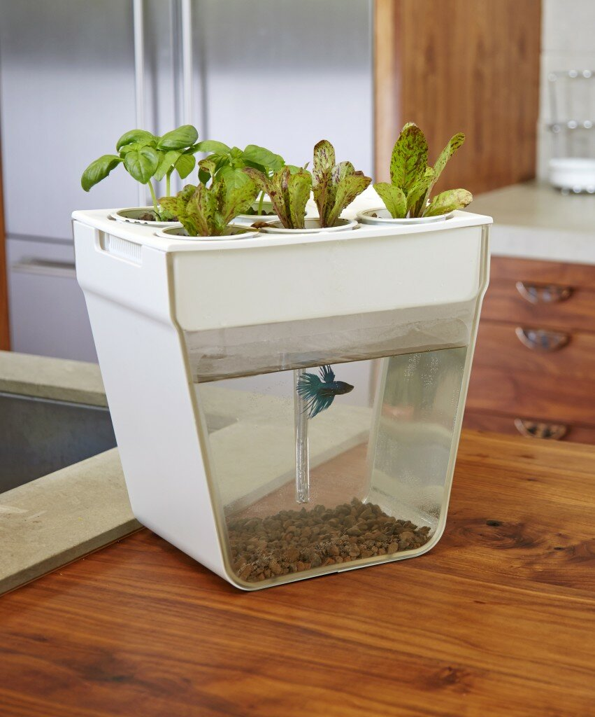 Get an Aquafarm from Back to the Roots